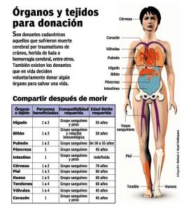 Organos y Tejidos para donación. Por trasplante.cl